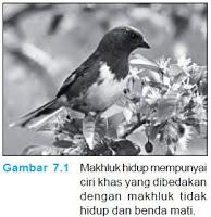 Burung bernafas