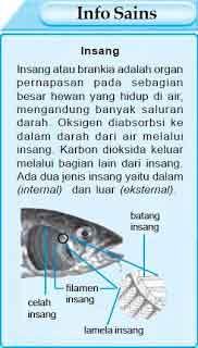 Ikan bernafas